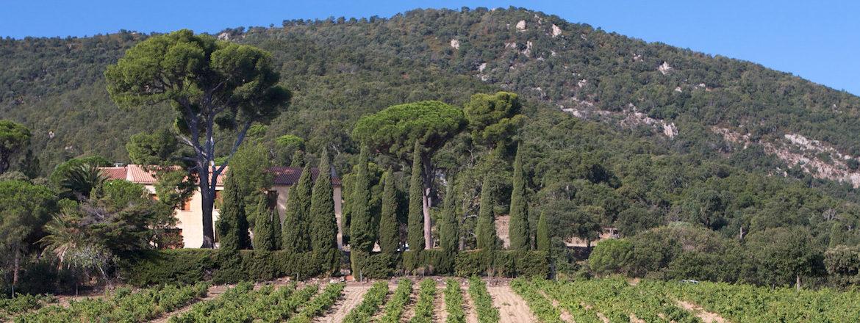 Vins du Roussillon - Mas Cristine