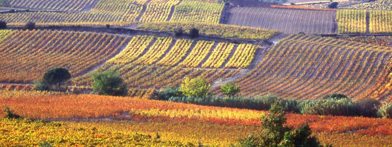 Mas Cremat - Vins du Roussillon
