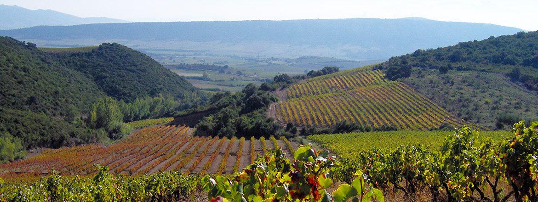 Vins du Roussillon - Domaine Comelade - Le Casot