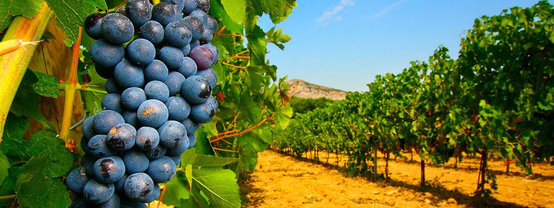 Vins du Roussillon - Mas de Lavail