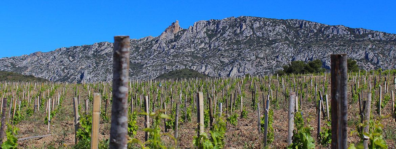 Vins du Roussillon - Frères Parcé cuvée Zoé Rosé 2016