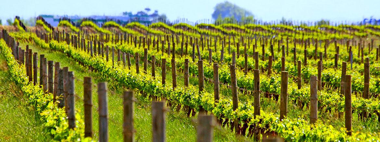 Cazes-john-wine-vin-sans-sulfites