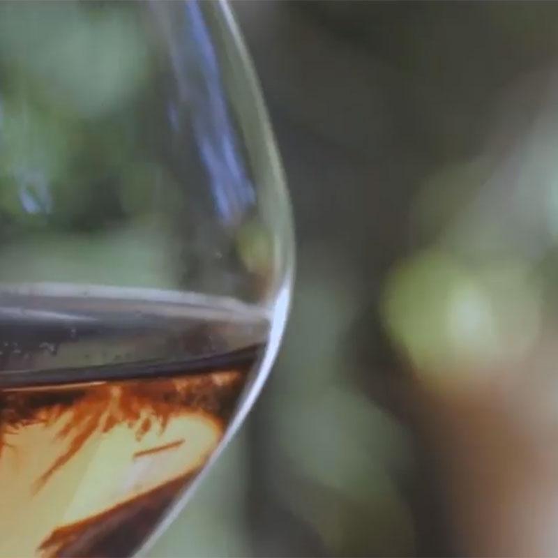 reportage | Femmes des vins du Roussillon