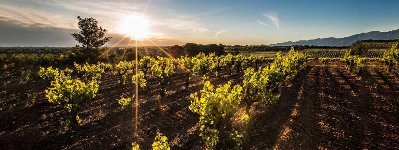 domaine-Sanac-vin-du-Roussillon