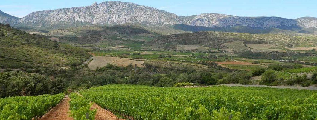 Vignerons de Tautavel Vingrau | Cabrils