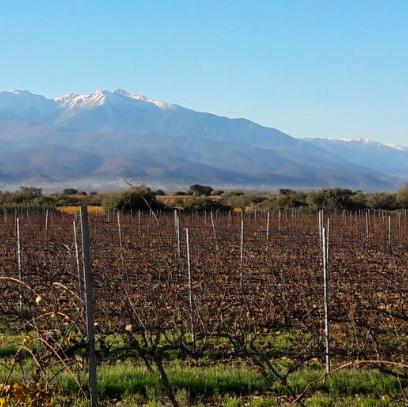Domaine Fontanel : Le terroir de Tautavel sublimé