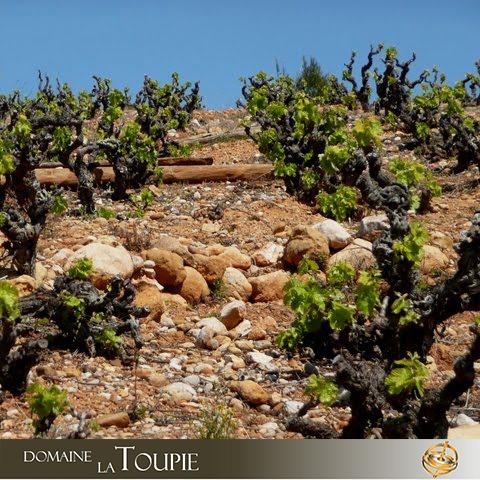 Domaine La Toupie | Fine Fleur